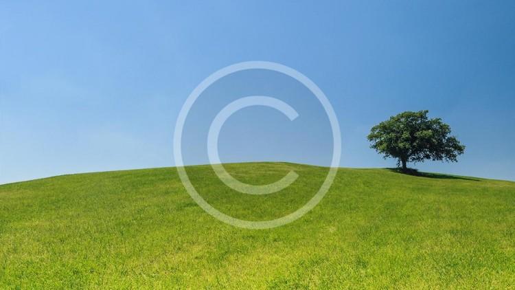 hill-meadow-tree-green.jpg